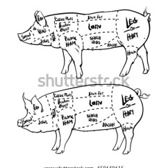 Pig Cuts Diagram Find Car Wiring Diagrams Pork Outline Butchery Set Stock Vector Royalty Free And Hand Drawn Isolated On White Background