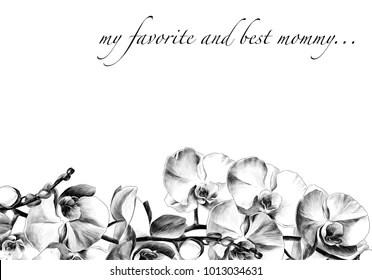 orkide Stok Vektörler, Görseller ve Vektör Sanatı