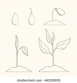 Plant Growth Cycle Images, Stock Photos & Vectors