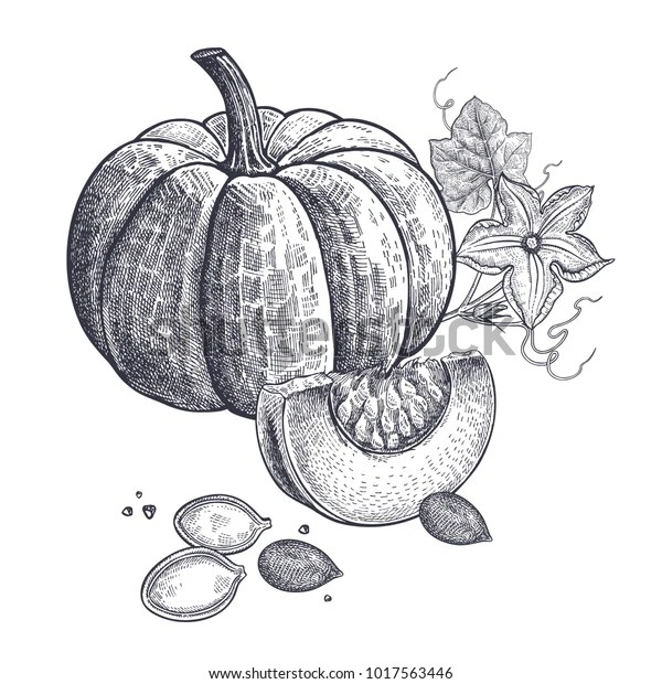 Pumpkin Flower Seeds Realistic Isolated Vector Stock