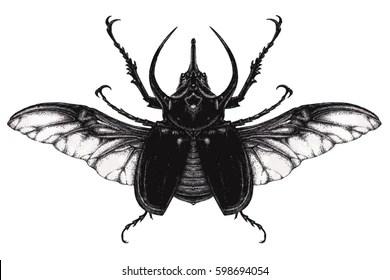 Rhinoceros Beetle Stock Vectors, Images & Vector Art