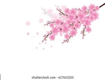 Cherry Blossoms Falling Stylized Wallpaper Sakura Flower Tree Stock Vectors Images Amp Vector Art