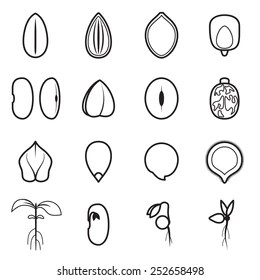 Germinating Bean Seed Images, Stock Photos & Vectors