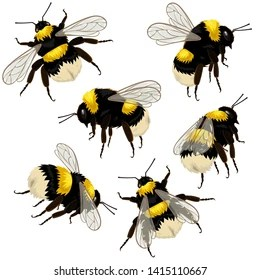 bee stripe pattern images