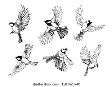 Birds Black White Images Stock Photos Vectors Shutterstock