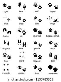 Animal Footprints Images, Stock Photos & Vectors