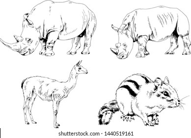Carnivorous Animal Images, Stock Photos & Vectors