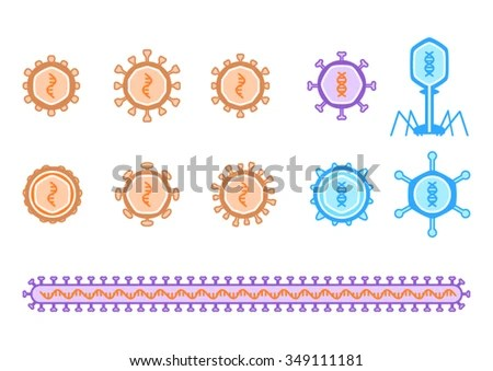 basic virus diagram ford f250 radio wiring simple viruses describing rna dna stock vector royalty free and including bacteriophage is orange
