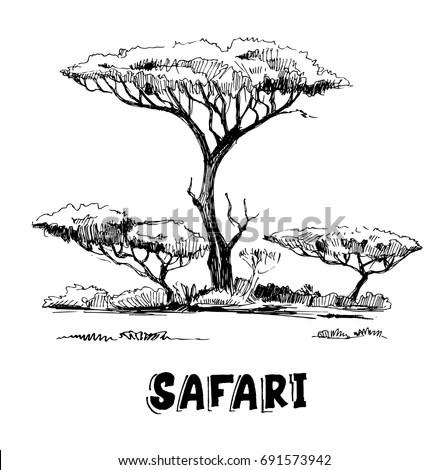 Sketch African Savanna Plants Trees Hand Stock Vector