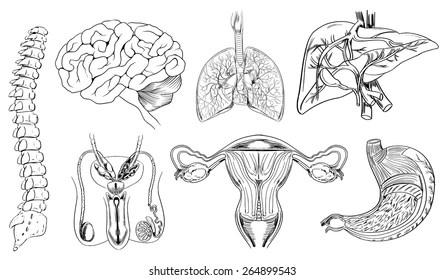 Female Organs Picture Images, Stock Photos & Vectors