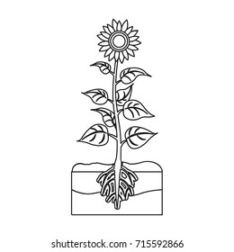 20+ Fantastic Ideas Sunflower Plant Drawing With Roots