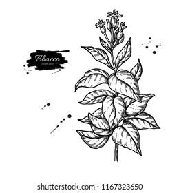 Tobacco Flower Stock Vectors, Images & Vector Art