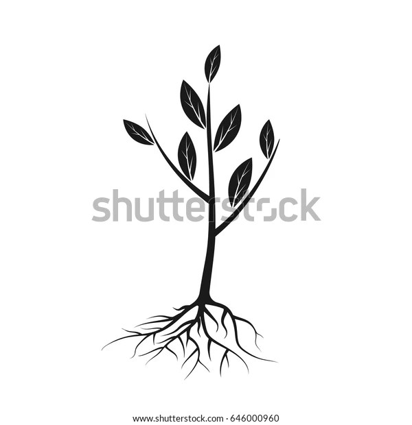 Tree Icon Black Roots Leaves Young Stock Vector (Royalty