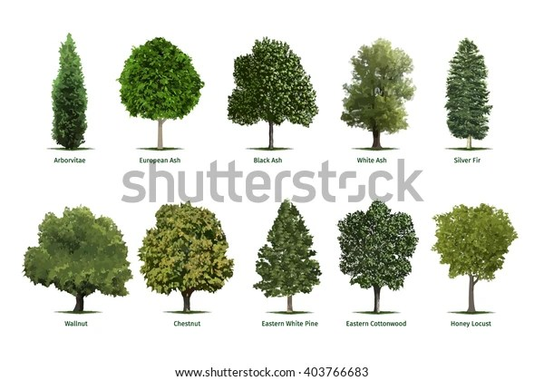 tree types sortsspecimensvector tree