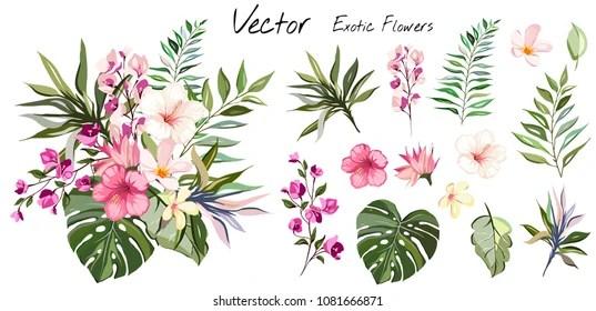 tropical flower vector art