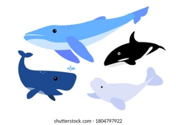 Beluga Cartoon Images Stock Photos & Vectors Shutterstock