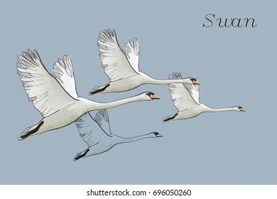 Pencil Drawn Flying Birds