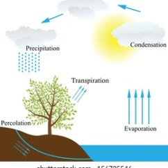 Labelled Diagram Of Water Cycle 2002 Saturn Stereo Wiring Images Stock Photos Vectors Shutterstock Vector Schematic Representation The In Nature