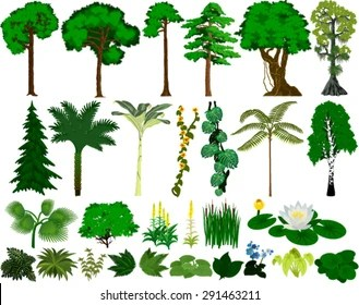 Aside from this, the tropical rainforest biome is home to the most common species of the rarest organisms on our planet. Rainforest Trees High Res Stock Images Shutterstock