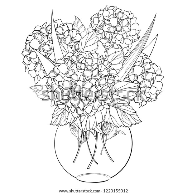Vector Vase Bouquet Outline Hydrangea Hortensia Stock