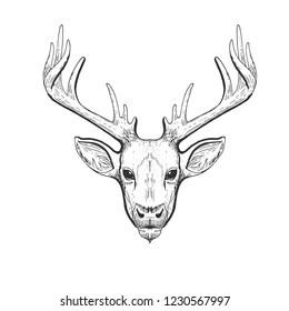 Head of a deer. Meditation, coloring of the mandala. Head