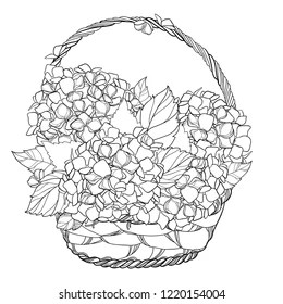 Flower Coloring Pages Images, Stock Photos & Vectors