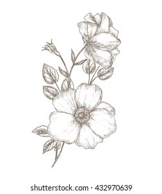 hand drawn flowers images