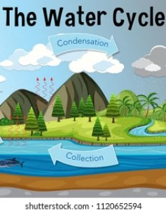 The water cycle diagram illustration also images stock photos  vectors shutterstock rh