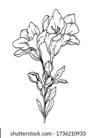 Freesia Flower Tattoo : freesia, flower, tattoo, Freesia, Tattoo, Stock, Images, Shutterstock