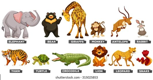 wild animal images stock