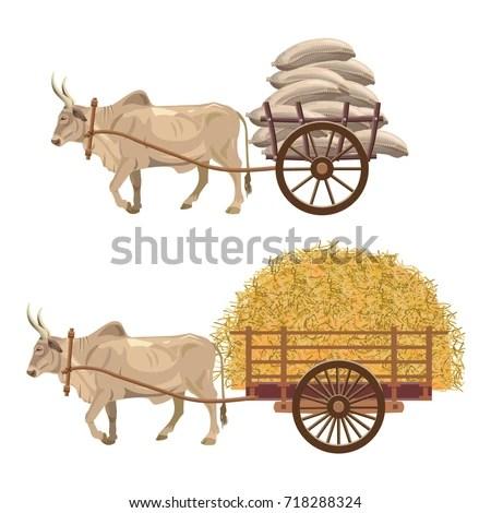 Zebu Bull Pulling Loaded Cart Sacks 스톡 벡터(사용료 없음) 718288324 - Shutterstock