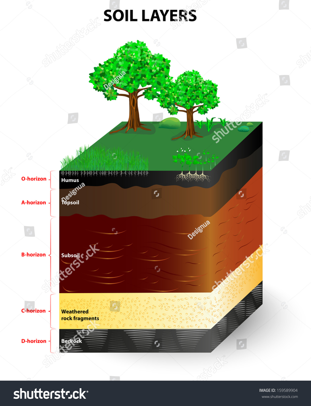 horizon diagram soil formation genie wiring royalty free and horizons 159589904 is a mixture of plant residue fine mineral particles which form layers