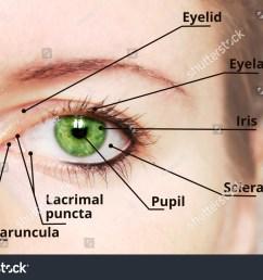 human eye anatomy diagram medical description green eye 231982330 [ 1500 x 1096 Pixel ]