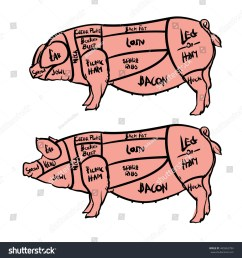 hand drawn pig isolated on white background drawing vector illustration pork cuts diagram butcher shop  [ 1500 x 1600 Pixel ]