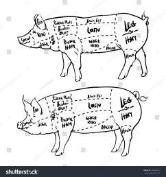 pork cuts diagram outline and butchery set hand drawn pig isolated on white background  [ 1500 x 1600 Pixel ]