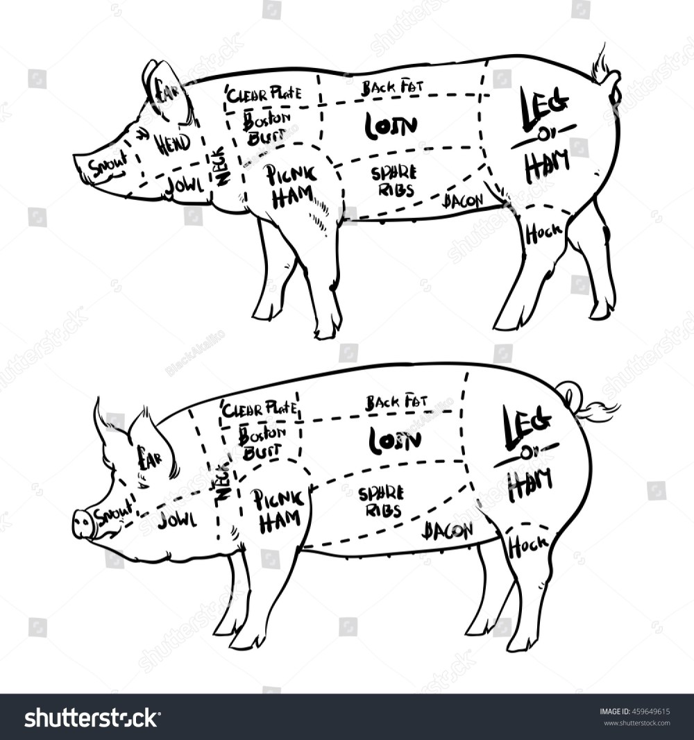 medium resolution of pork cuts diagram outline and butchery set hand drawn pig isolated on white background