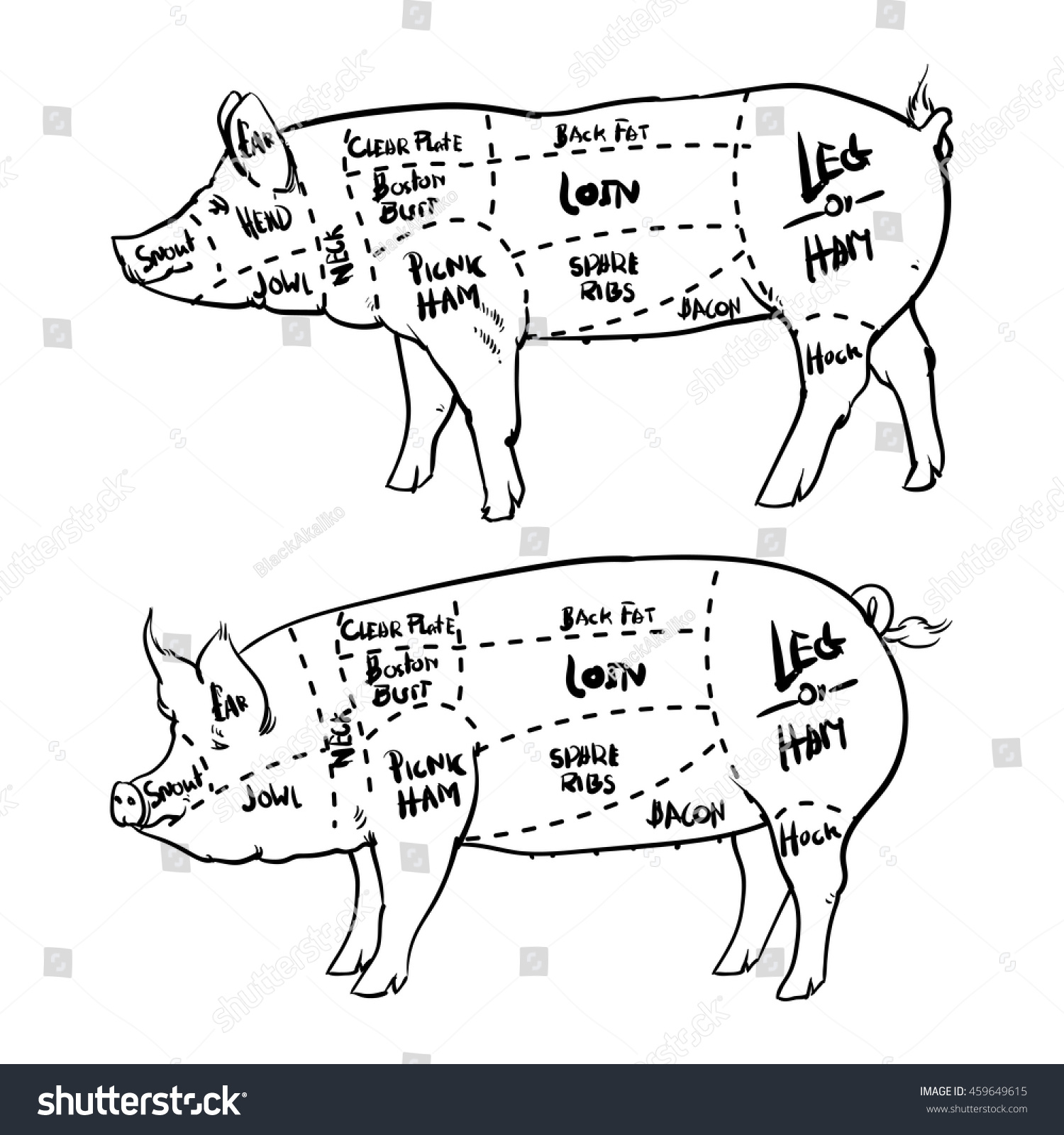 hight resolution of pork cuts diagram outline and butchery set hand drawn pig isolated on white background