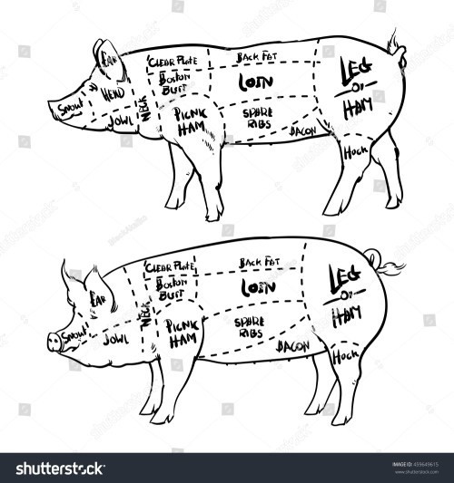 small resolution of pork cuts diagram outline and butchery set hand drawn pig isolated on white background