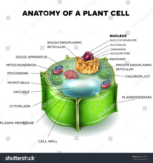 small resolution of 3d plant cell diagram wiring diagram blog 3d plant cell diagram