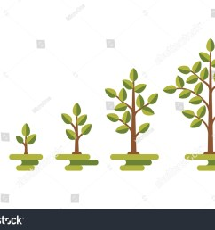 green tree with leaf growth diagram business cycle development illustration 519246196 [ 1500 x 1101 Pixel ]