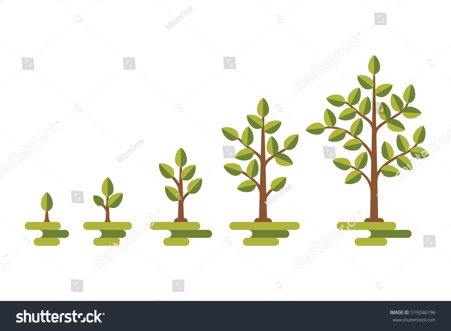 hight resolution of green tree with leaf growth diagram business cycle development illustration 519246196