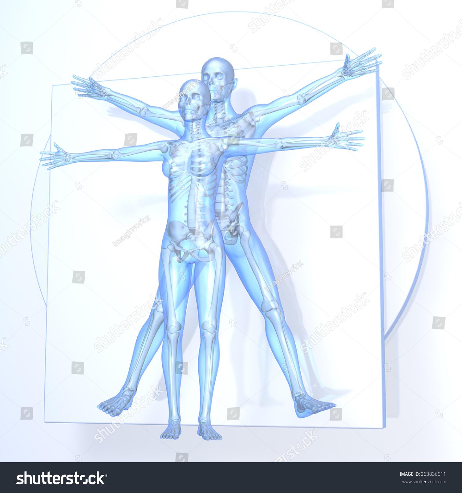 Leonardo Da Vinci Anatomy Discoveries Image collections - human body ...
