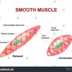 Slug Anatomy Diagram Plasma Membrane Worksheet Online Image And Photo Editor Shutterstock