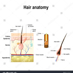Slug Anatomy Diagram Hopkins 7 Pin Trailer Wiring Online Image And Photo Editor Shutterstock
