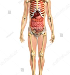 3d rendered illustration of male digestive system illustration [ 900 x 1600 Pixel ]