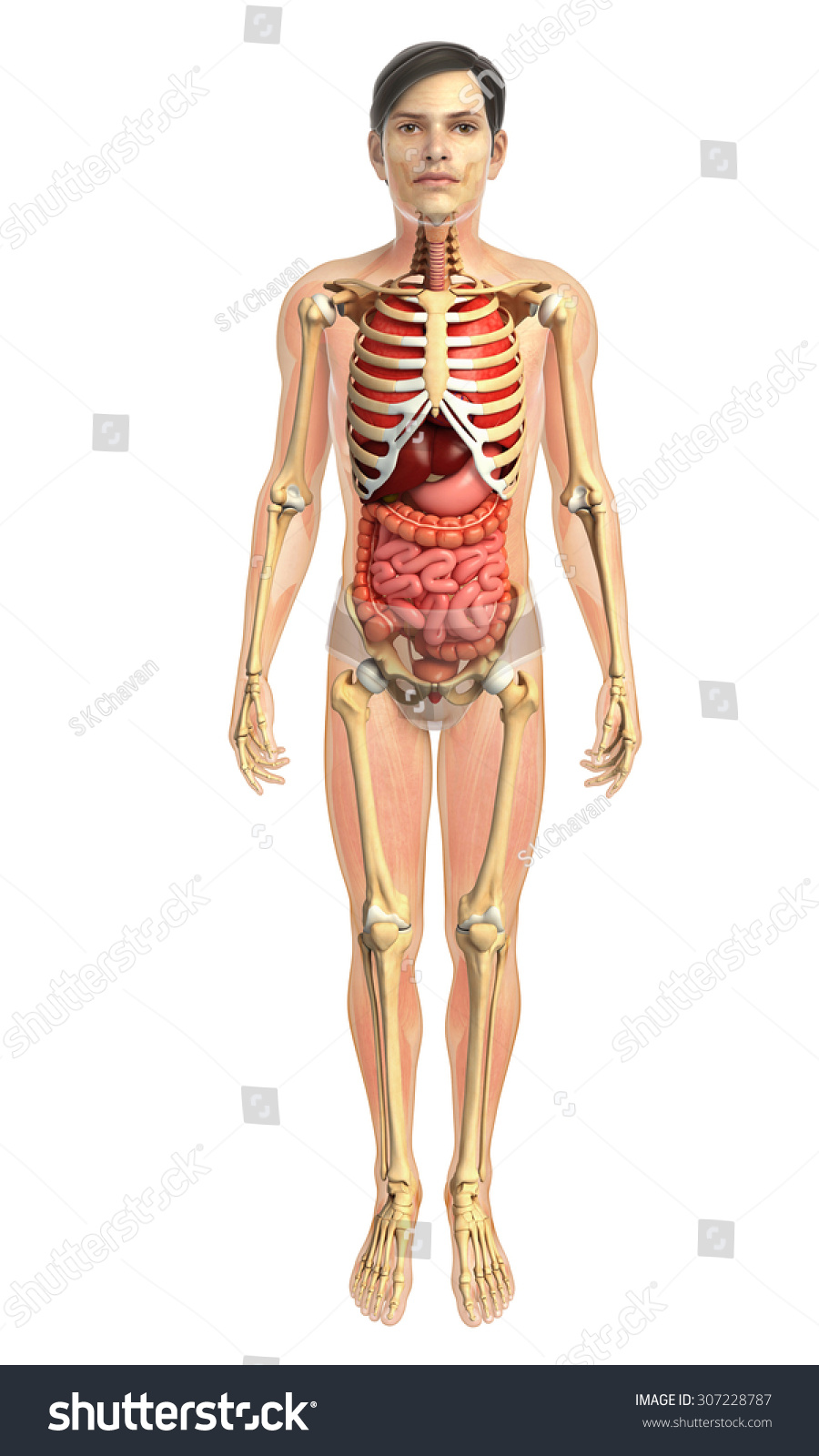 hight resolution of 3d rendered illustration of male digestive system illustration