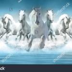 3d Wallpaper Seven Horses Running Stock Photo Edit Now 1429981745