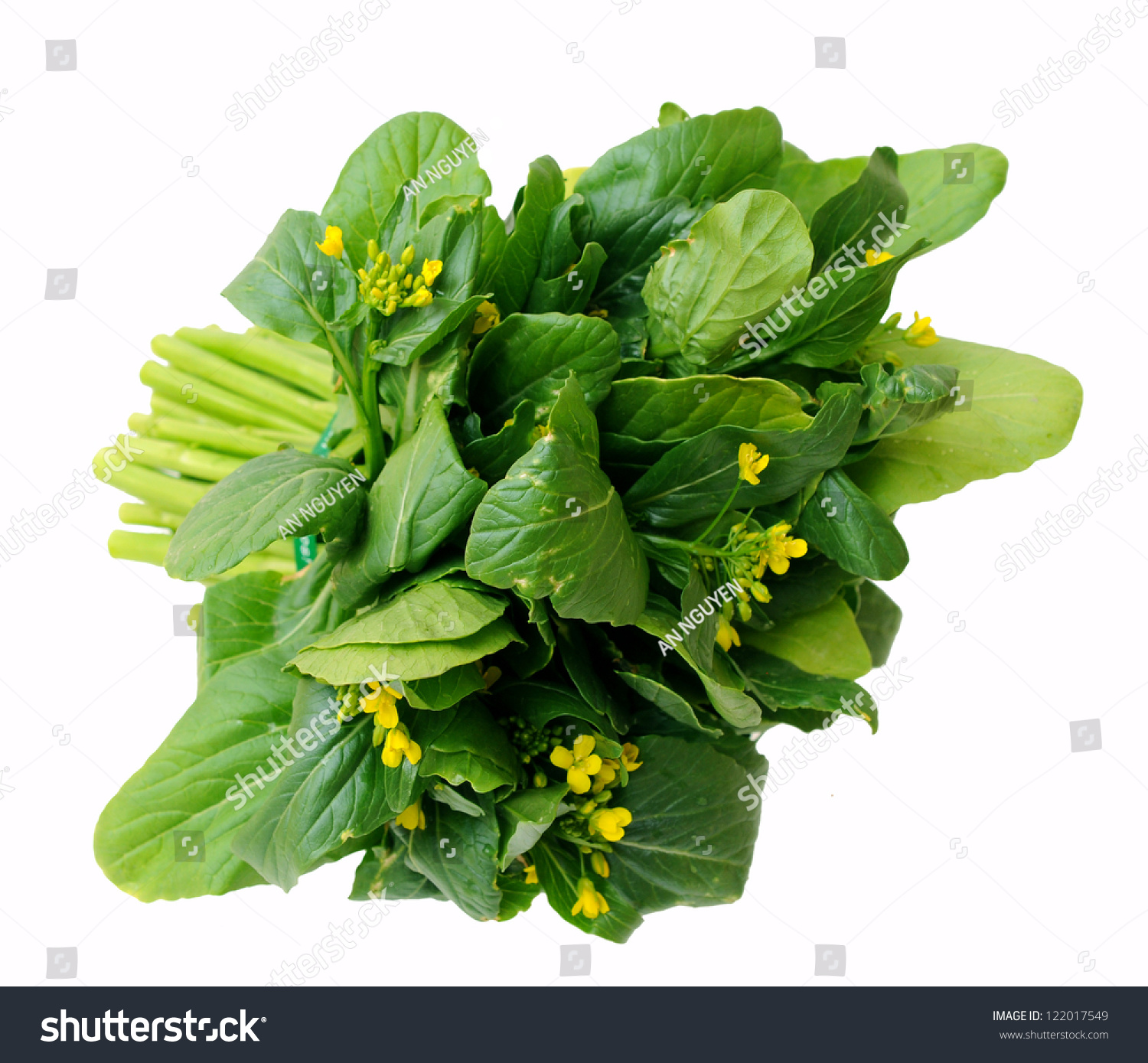 A Bunch Of Chinese Spinach Isolated On White Background Stock Photo 122017549 : Shutterstock