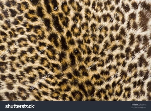 Real Cheetah Fur