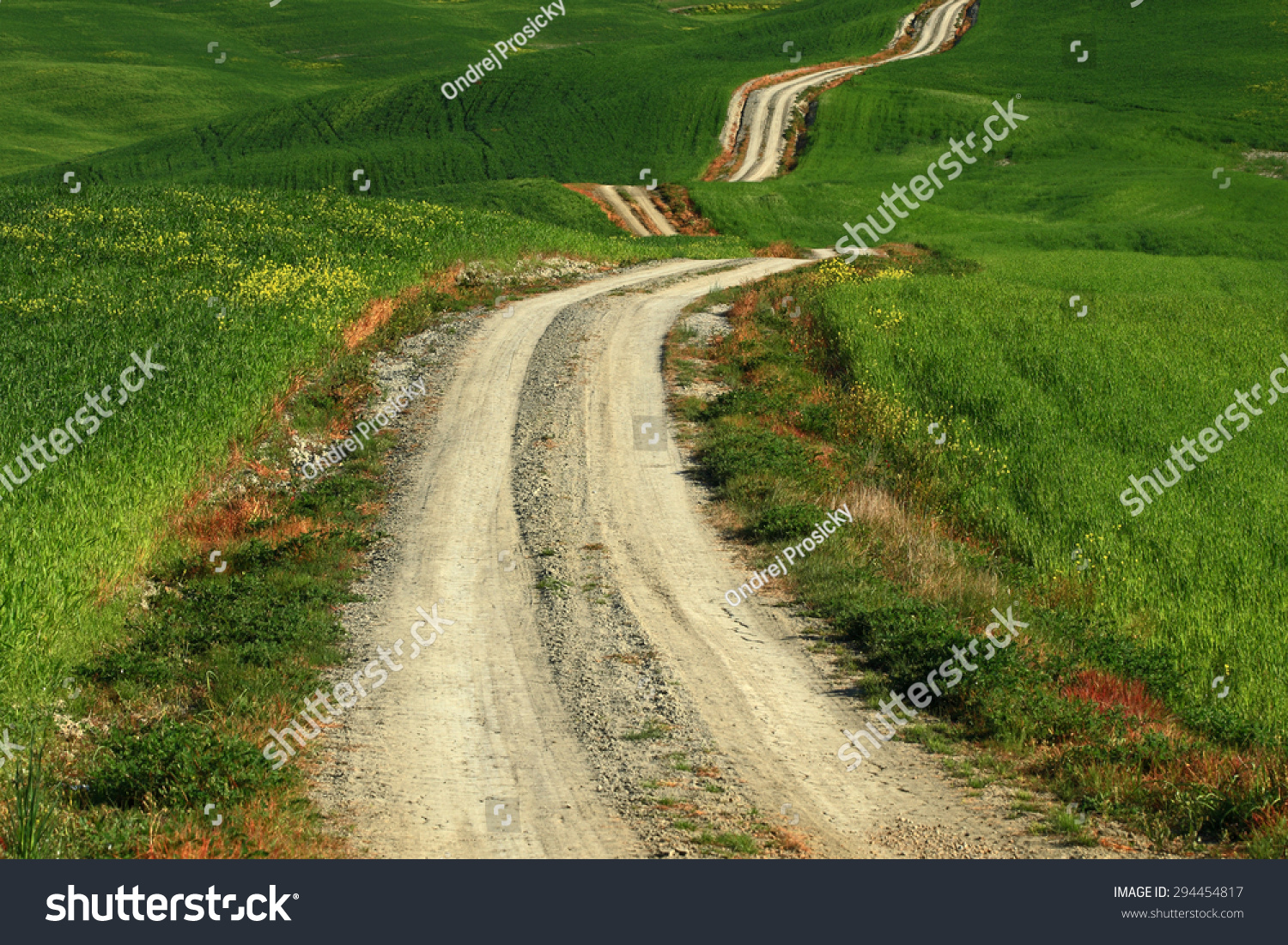 A Long And Winding Rural Path Crosses The Hills, Tuscany, Italy Stock Photo 294454817 : Shutterstock
